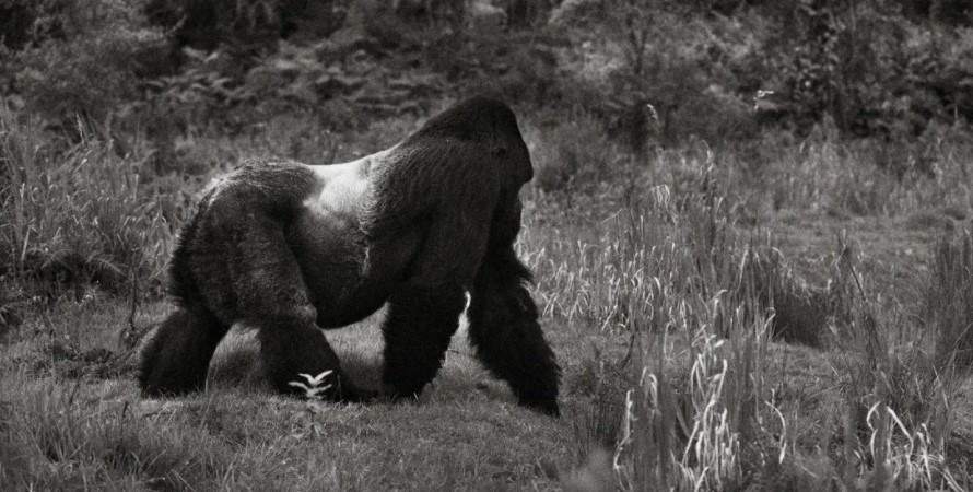 Bwindi impenetrable forest national park other than seeing rare mountain gorillas