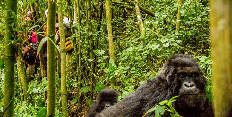 Top tourist activities in Bwindi impenetrable national park